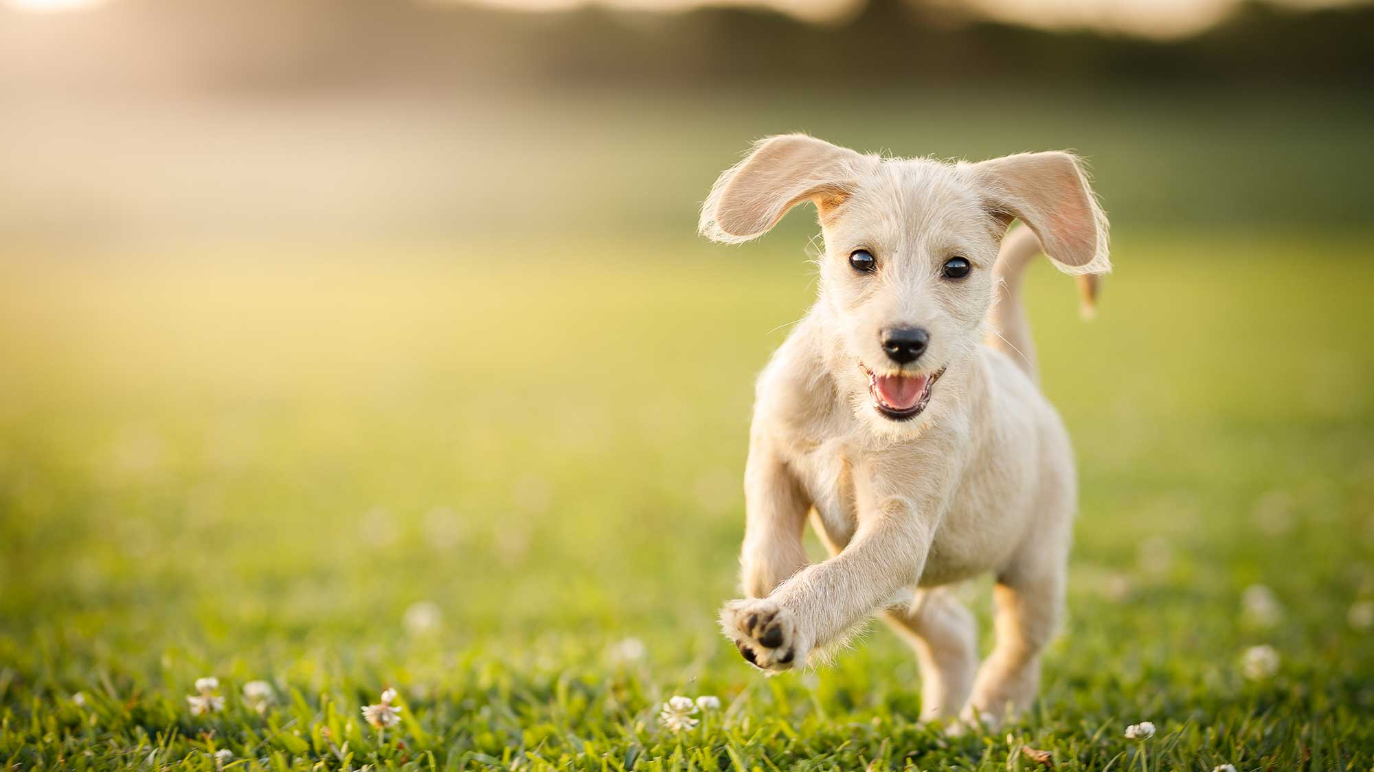 West Knoxville TN Pet Dental Care