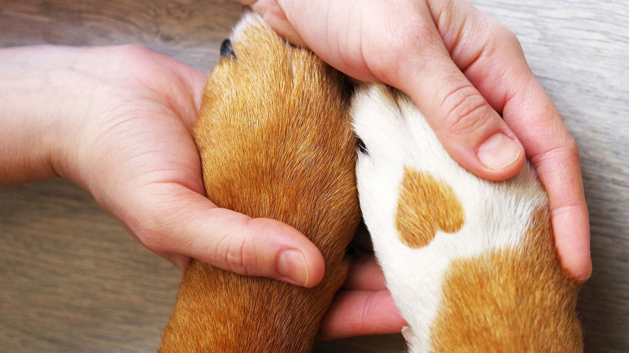End-of-Life Veterinary Care Knoxville TN