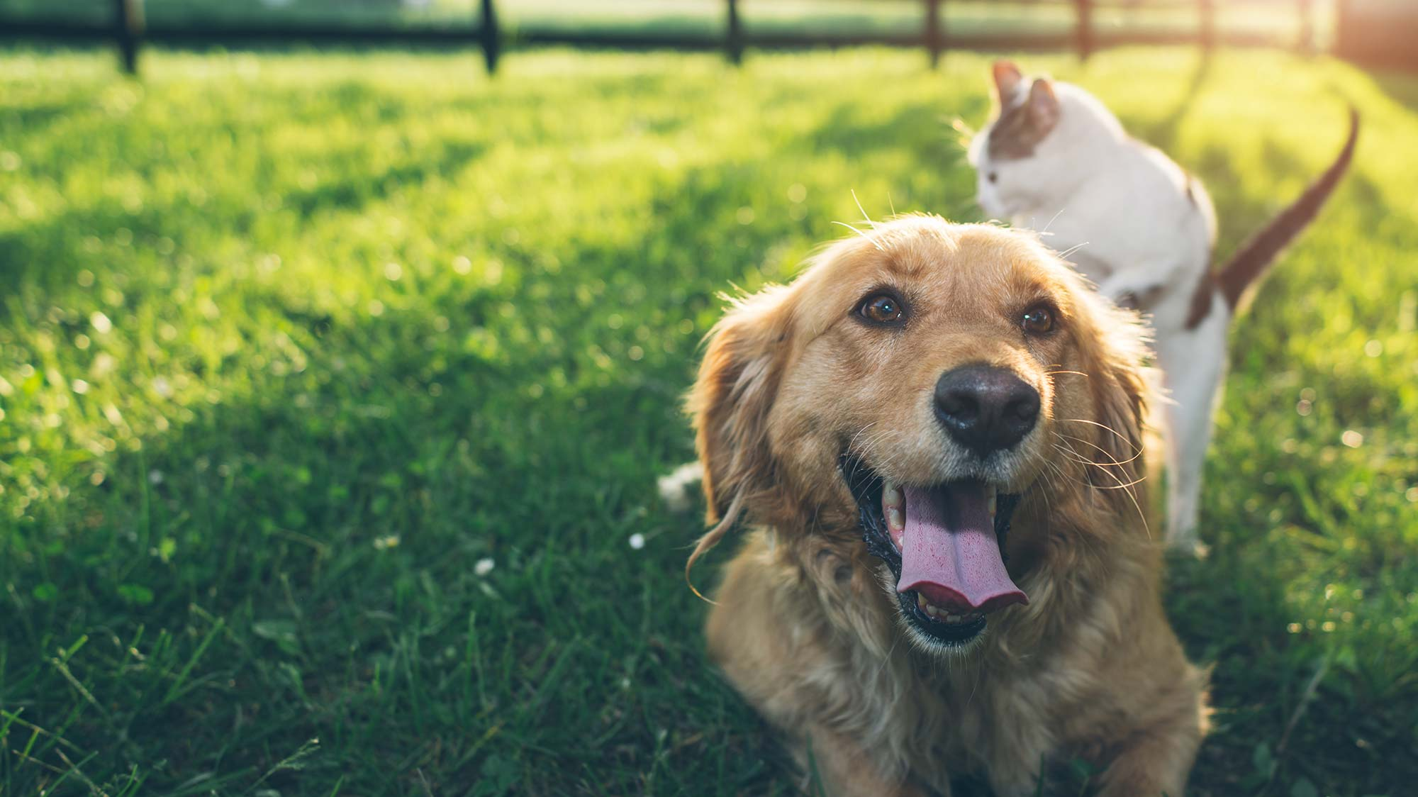 Review Our West Knoxville TN Veterinarians