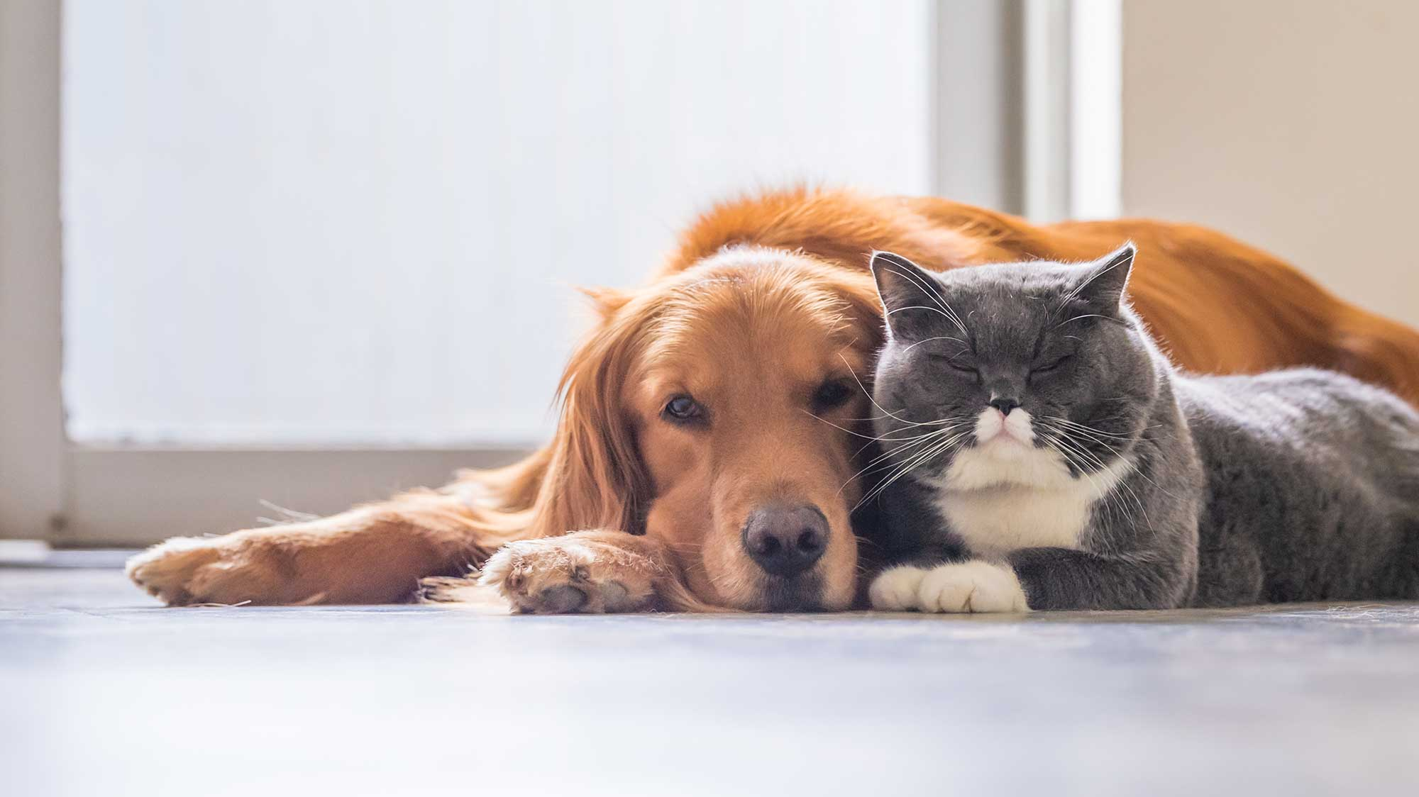 Pet Wellness in West Knoxville TN